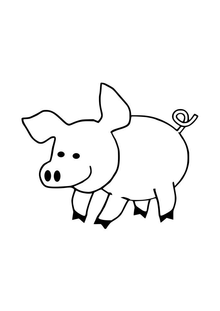 porco para colorir