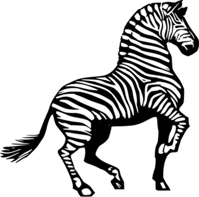 Animais para colorir zebra