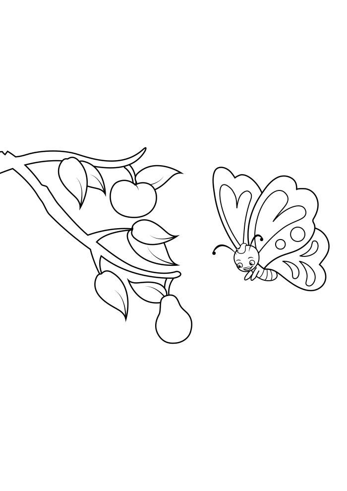 borboleta para colorir 5