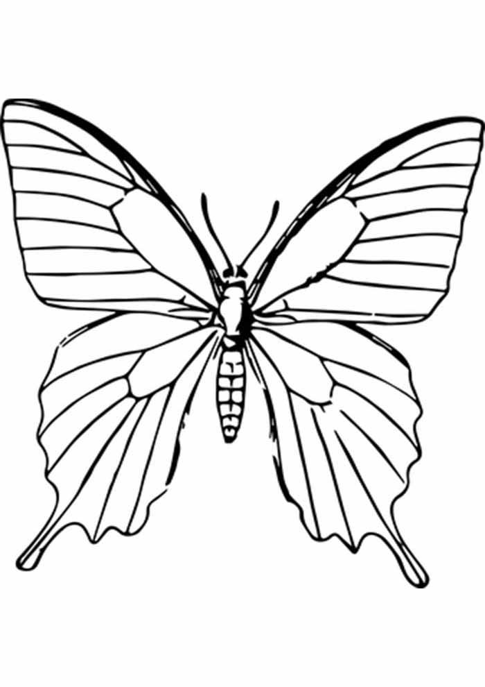 borboleta para colorir contorno