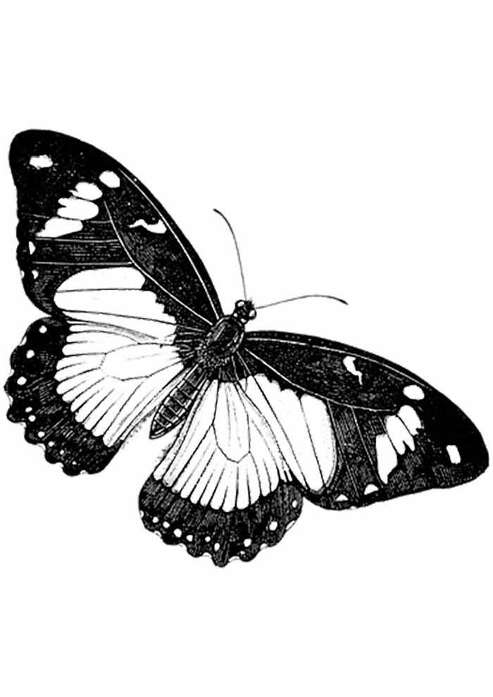 borboleta para colorir de lado