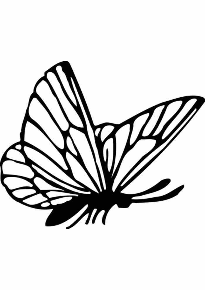borboleta para colorir de perfil