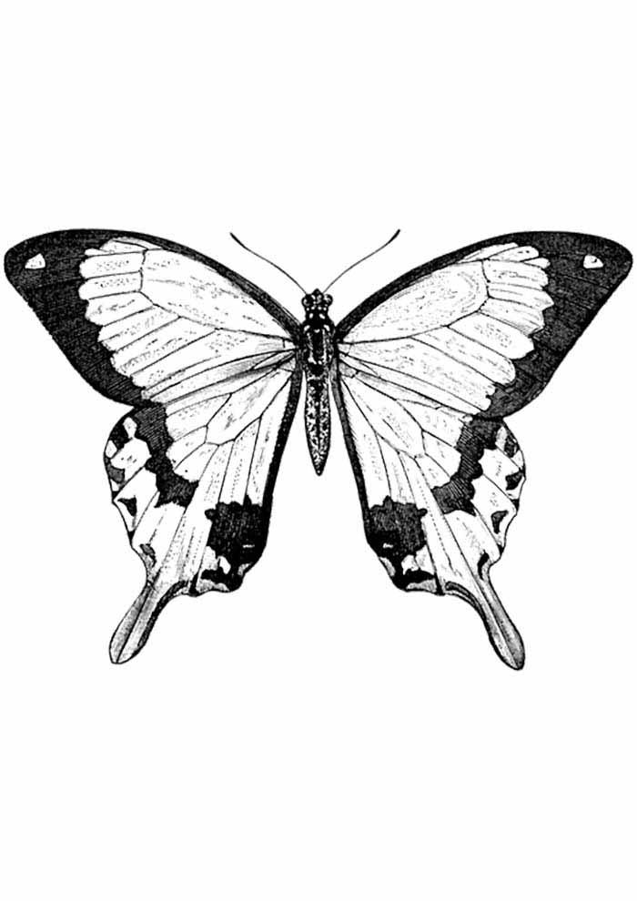 borboleta para colorir detalhada