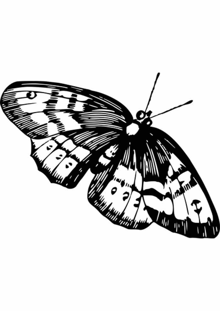 borboleta para colorir dupla asas