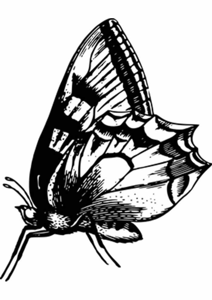 borboleta para colorir perfil