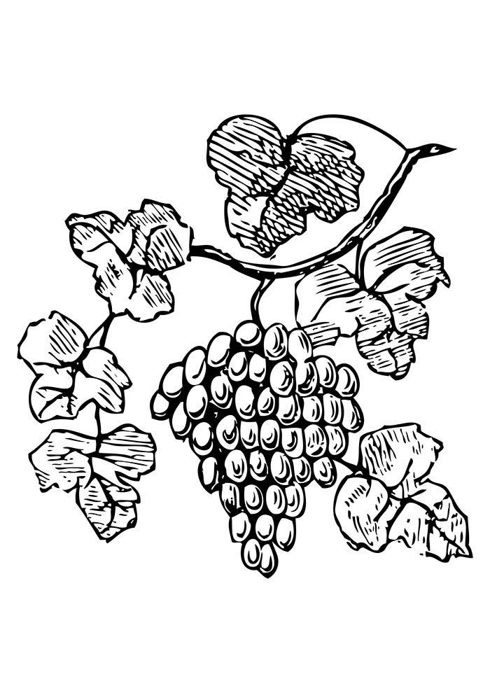 cacho de uva para colorir