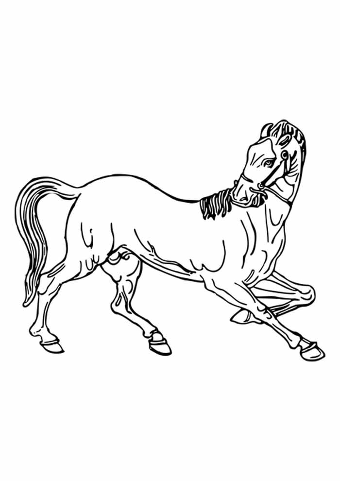 cavalo bonito para colorir