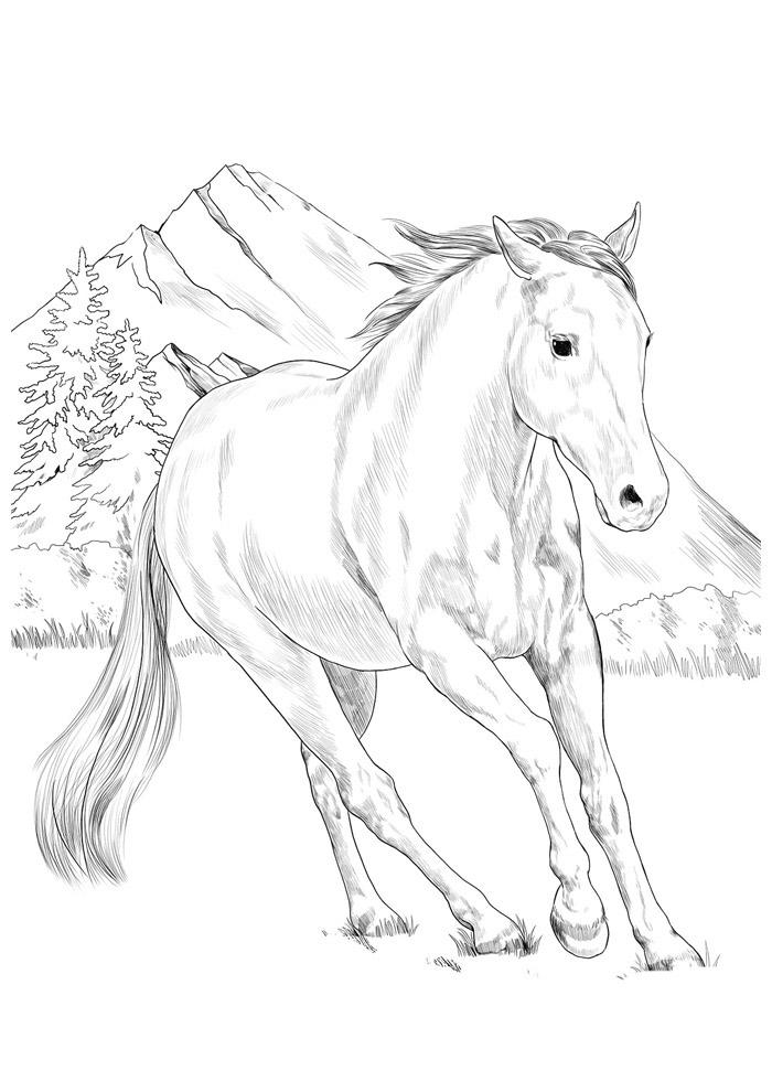 cavalo para colorir 134