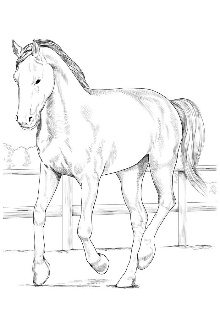 cavalo para colorir 135