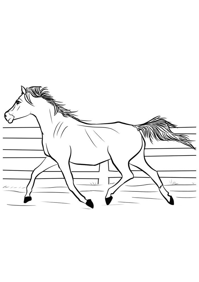 cavalo para colorir 136