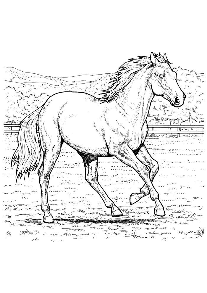 cavalo para colorir 38