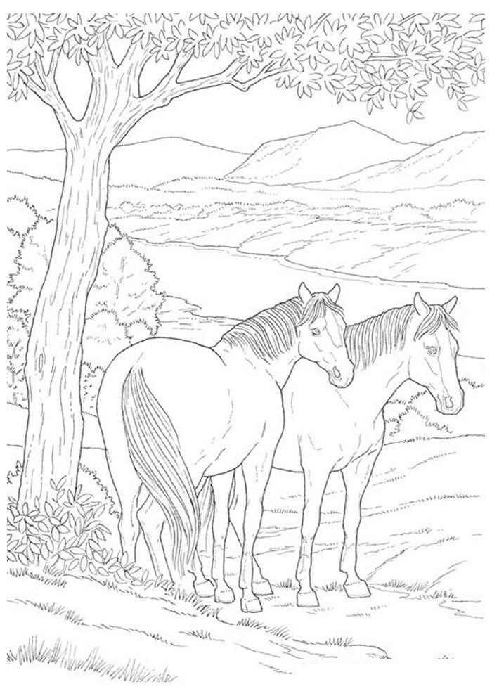 cavalo para colorir 42
