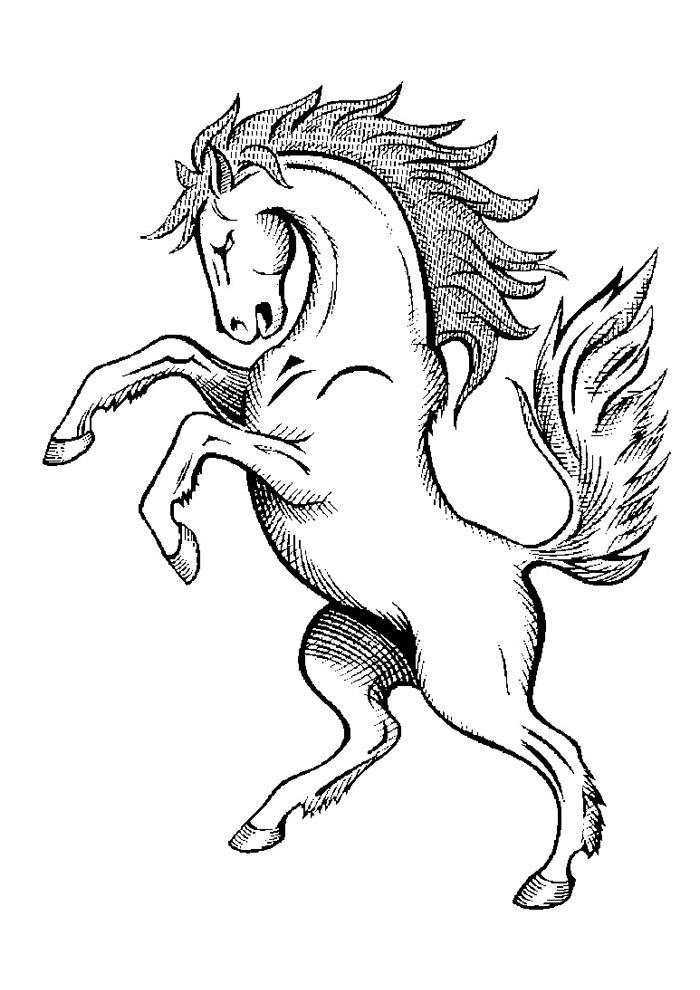 cavalo para colorir 43