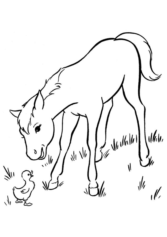cavalo para colorir 55