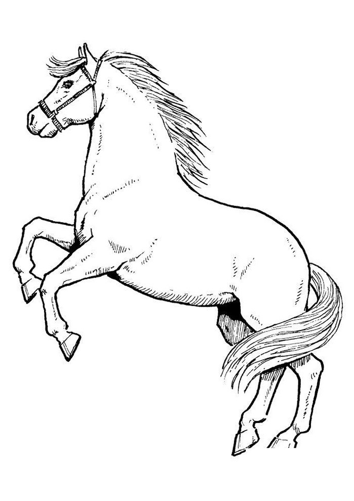 cavalo para colorir 60