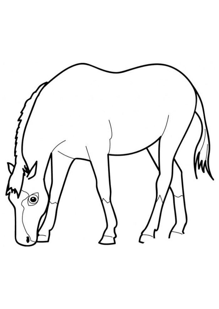 cavalo para colorir 62