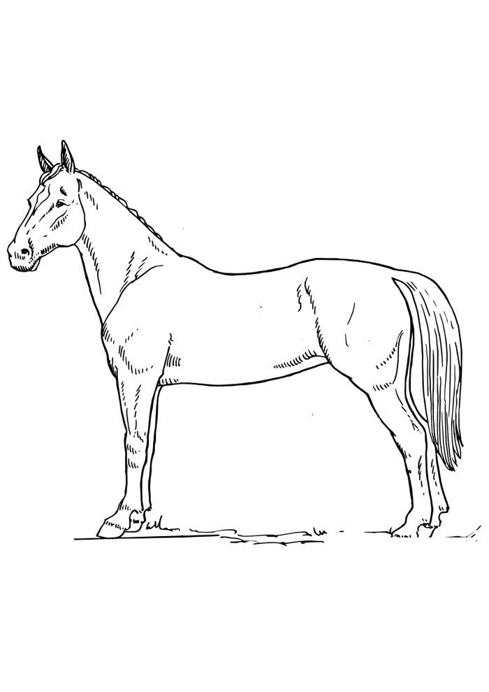 cavalo para colorir 65
