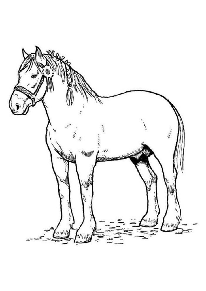 cavalo para colorir 67