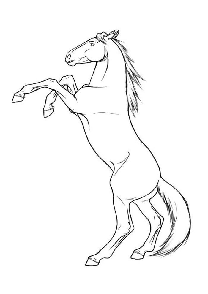 cavalo para colorir 69
