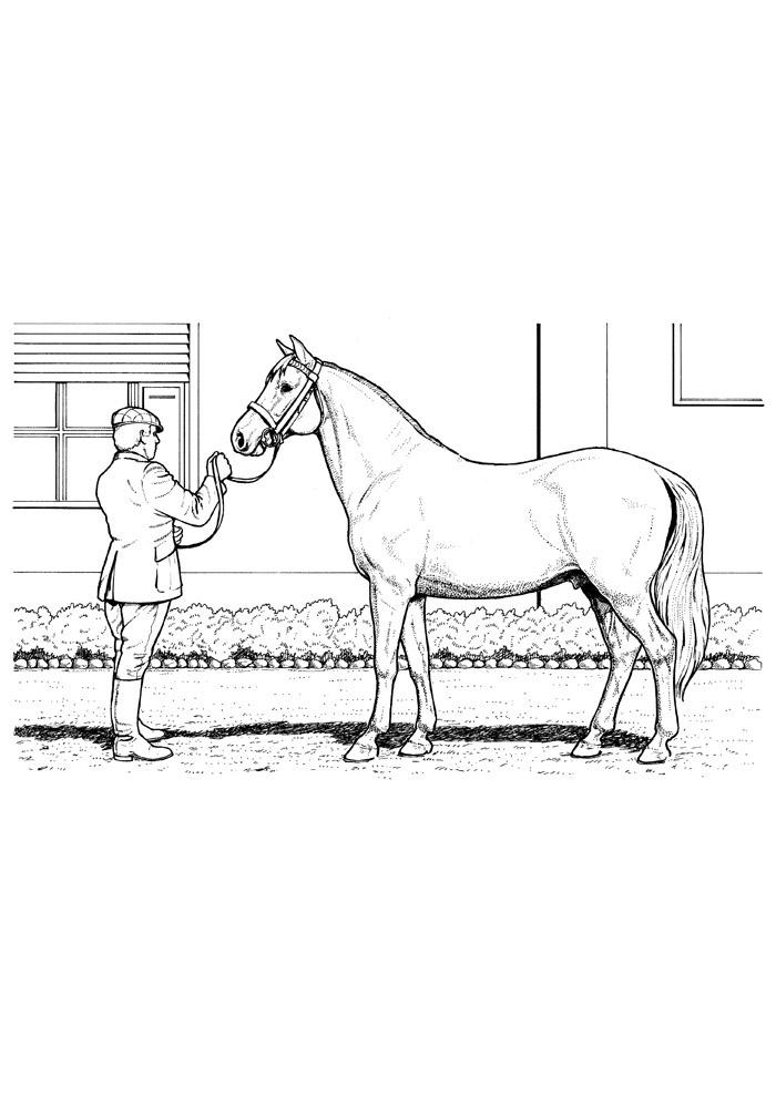 cavalo para colorir 75