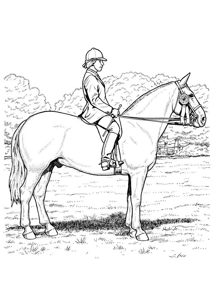 cavalo para colorir 77