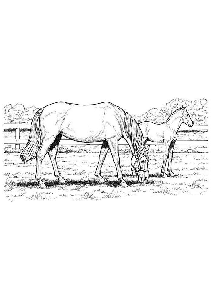 cavalo para colorir 78