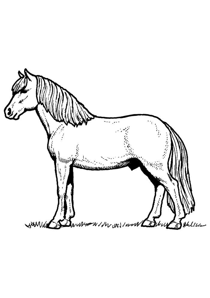cavalo para colorir 79