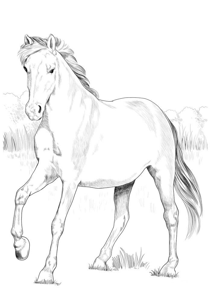 cavalo para colorir 80