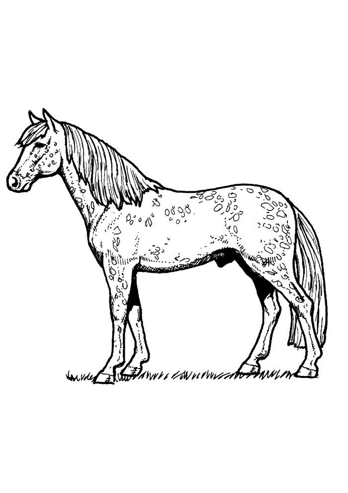 cavalo para colorir 81