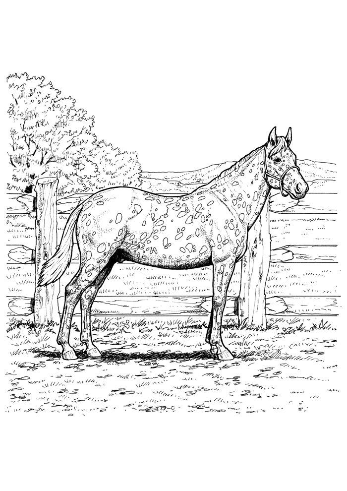 cavalo para colorir 83
