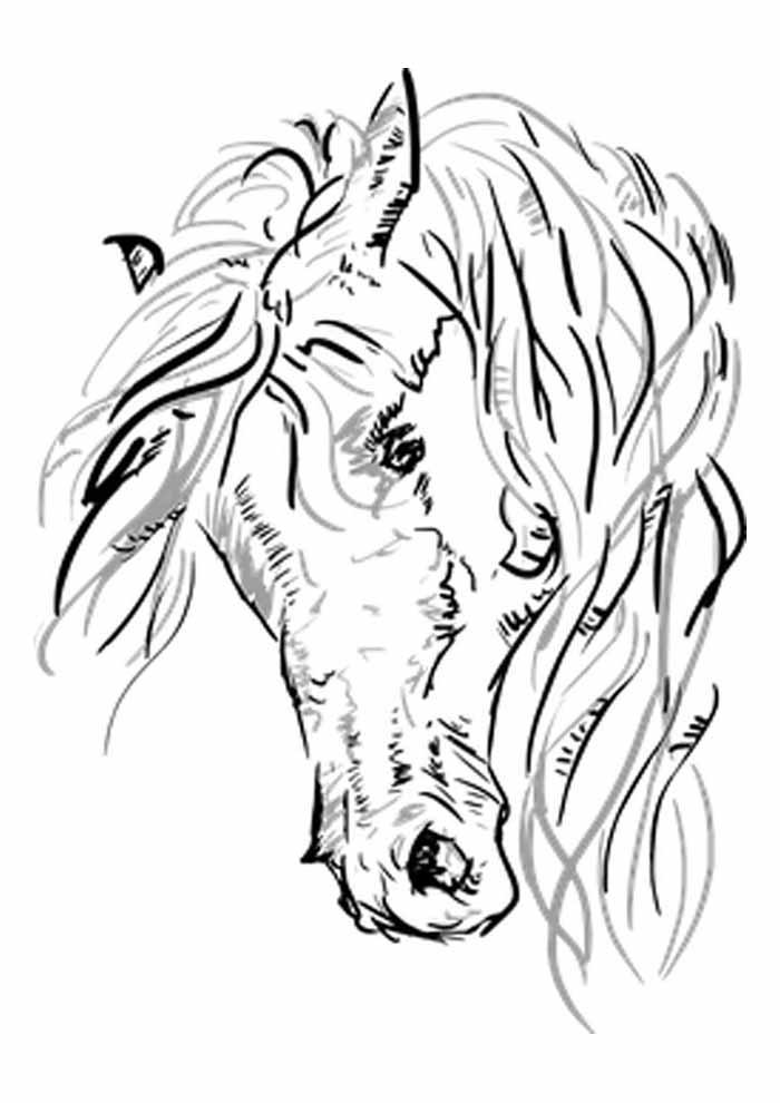 cavalo para colorir cabeça perfil