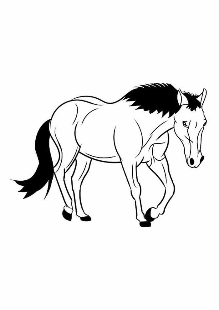 cavalo para colorir elegante