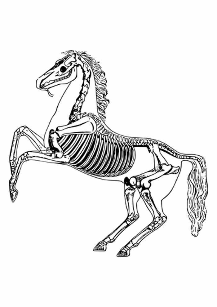 cavalo para colorir esqueleto