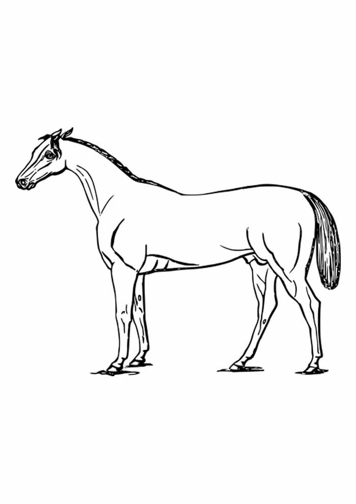 cavalo para colorir forte