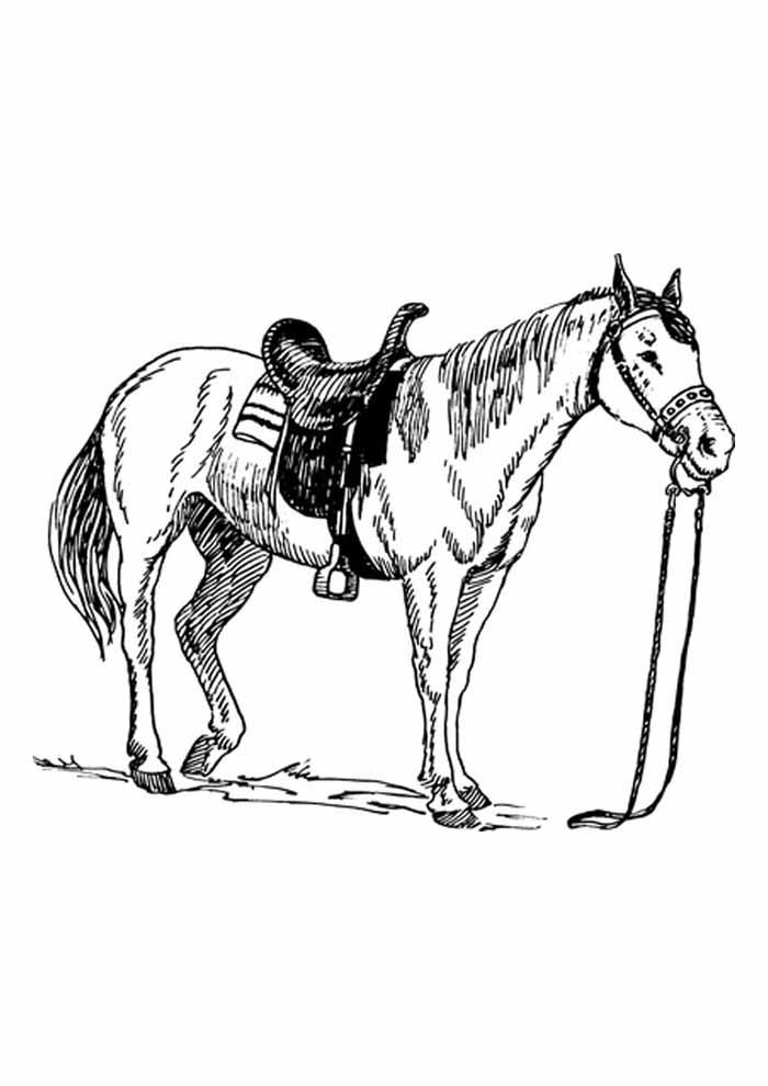 33 Desenhos De Cavalos Para Imprimir E Colorir Desenhos Para Colorir