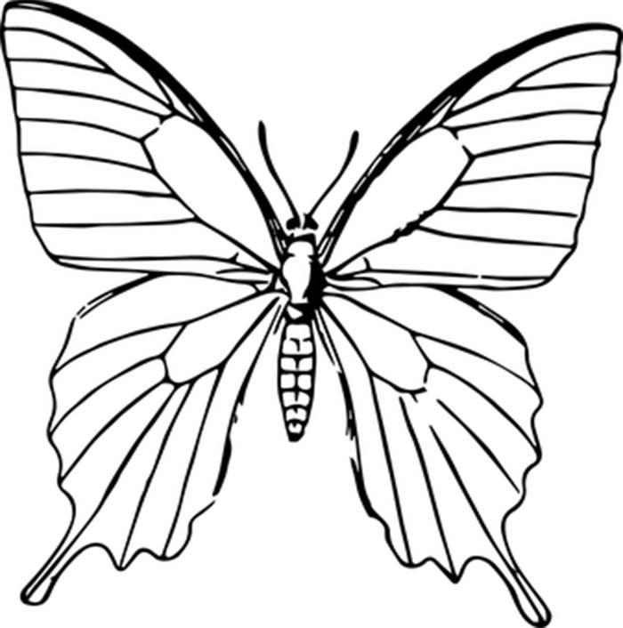Contorno de borboleta para colorir