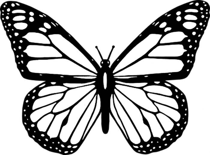 Desenho de borboleta para imprimir e colorir