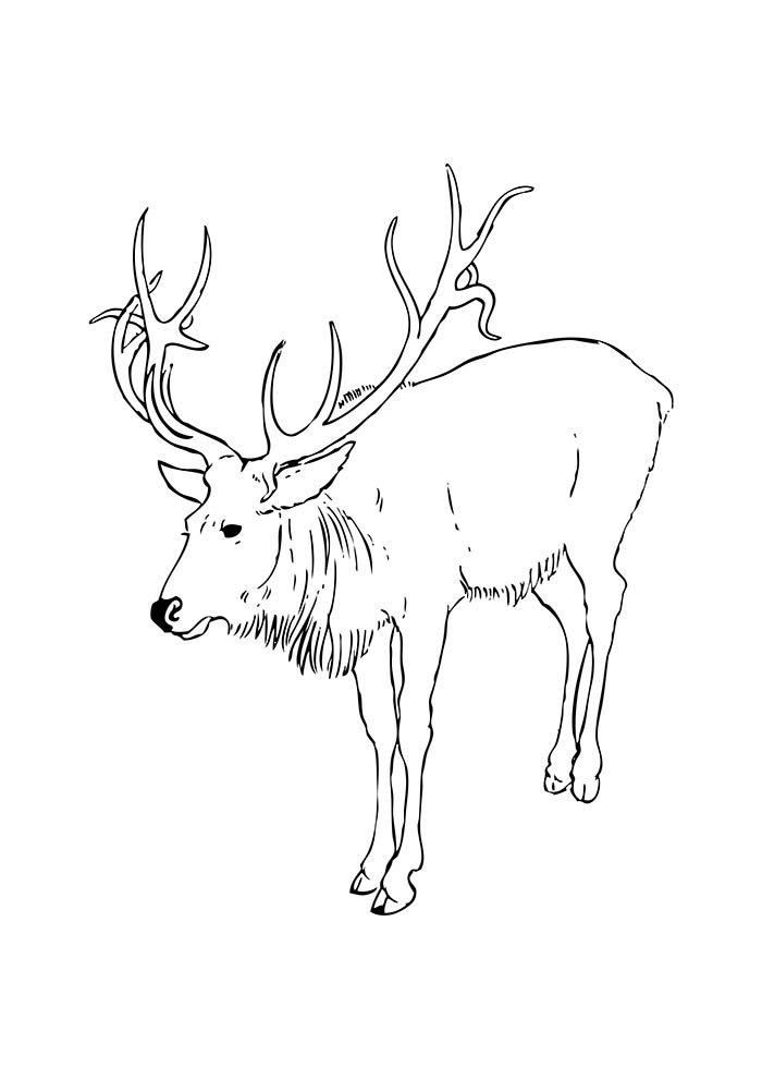 desenho de natal para colorir rena