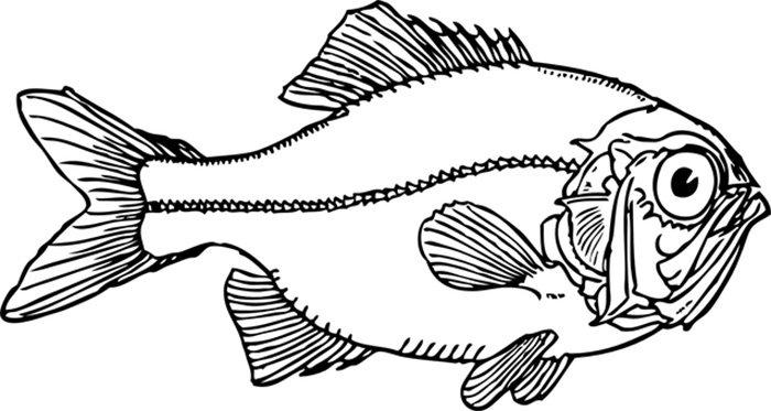 Desenho de peixe para imprimir
