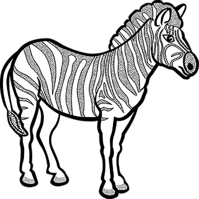 Desenho de zebra grande para colorir