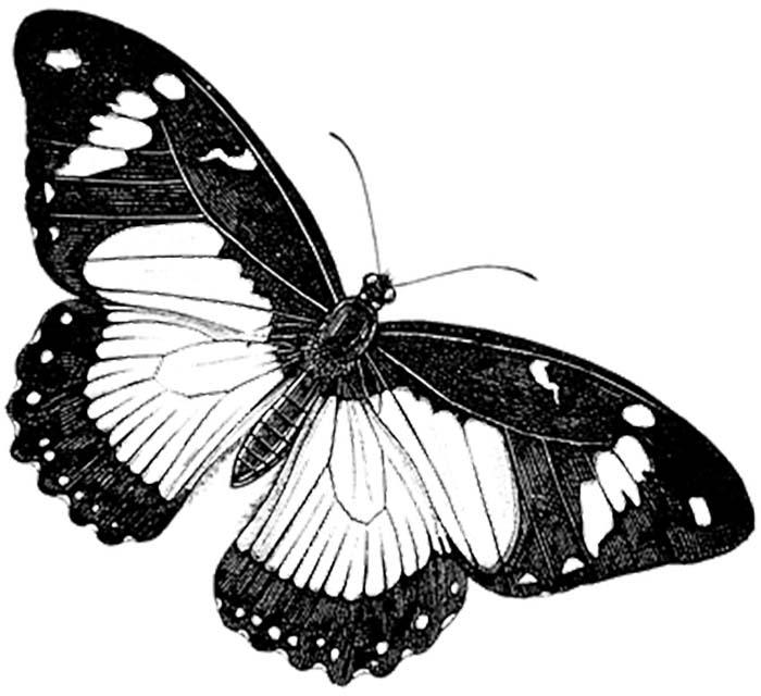Desenho para colorir com borboleta