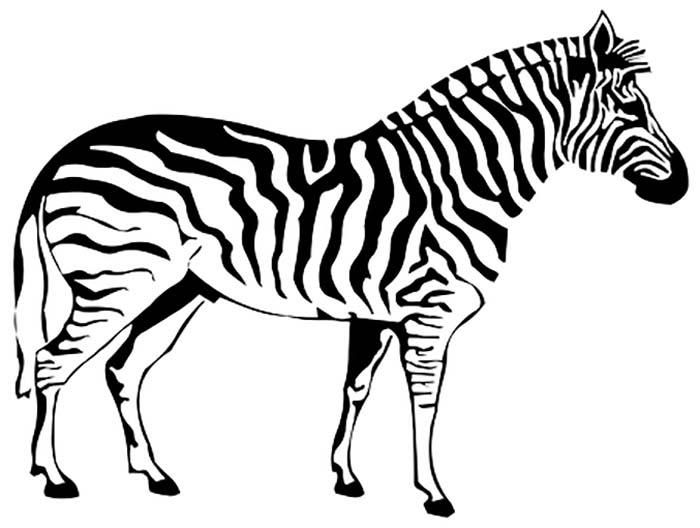 Desenho para colorir de zebra
