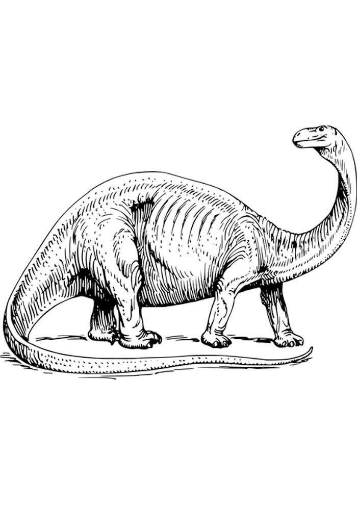 Dinossauros para colorir