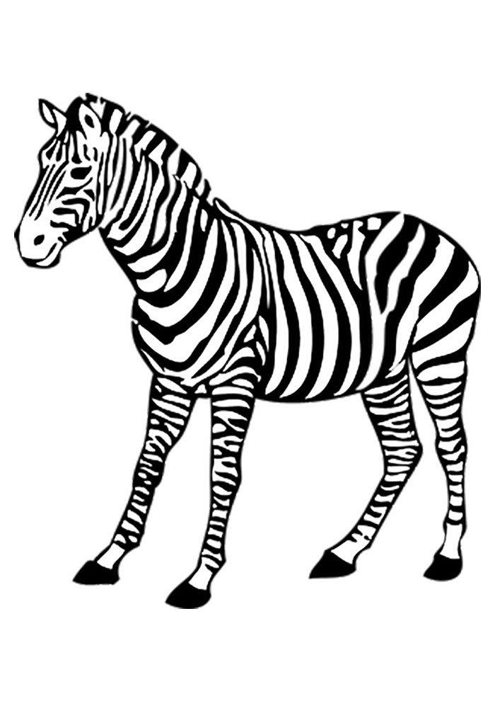 10 Desenhos de Zebras para Colorir