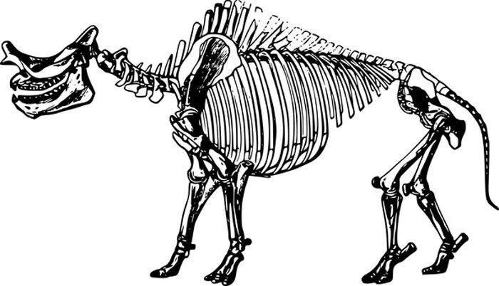 Dinossauro esqueleto para colorir