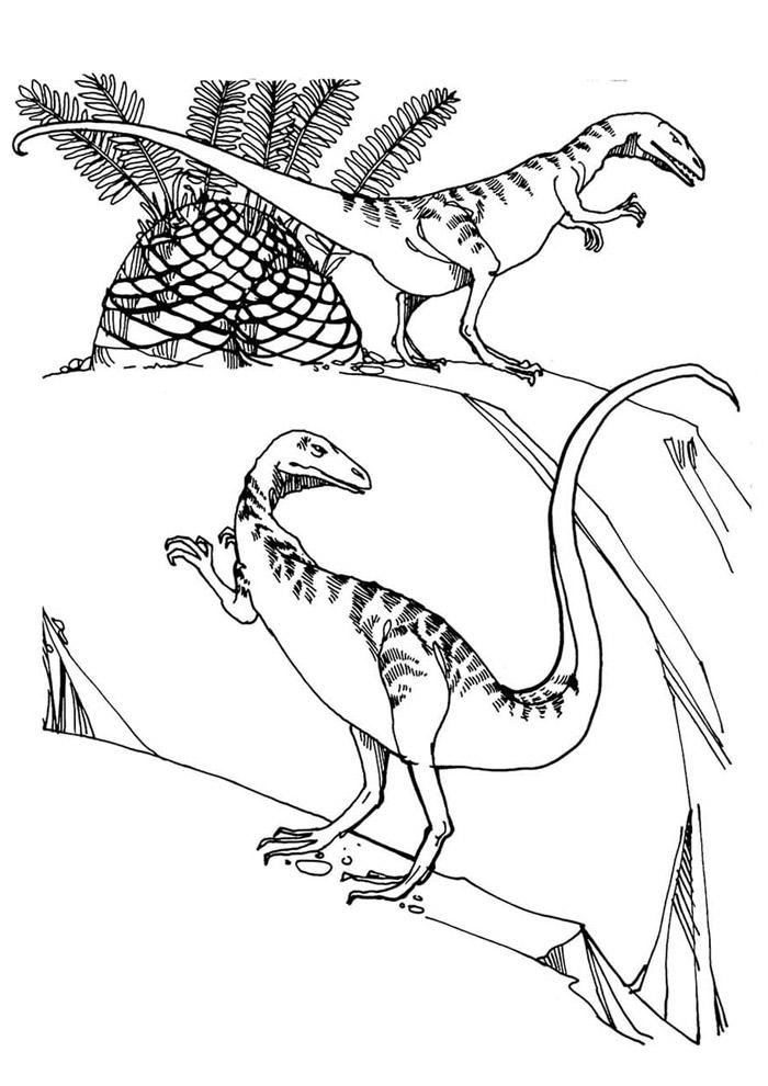 dinossauro para colorir 51