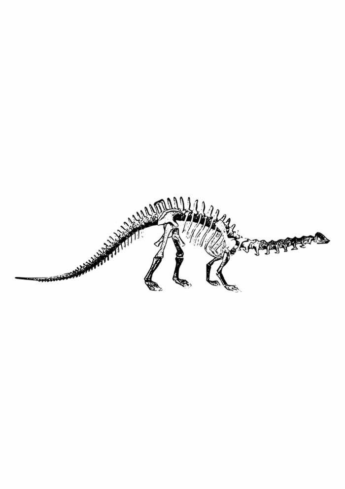 dinossauro para colorir esqueleto braquiossauro