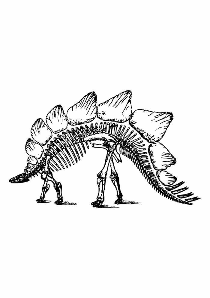 dinossauro para colorir esqueleto estegossauro