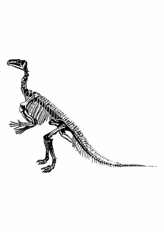 dinossauro para colorir esqueleto t rex