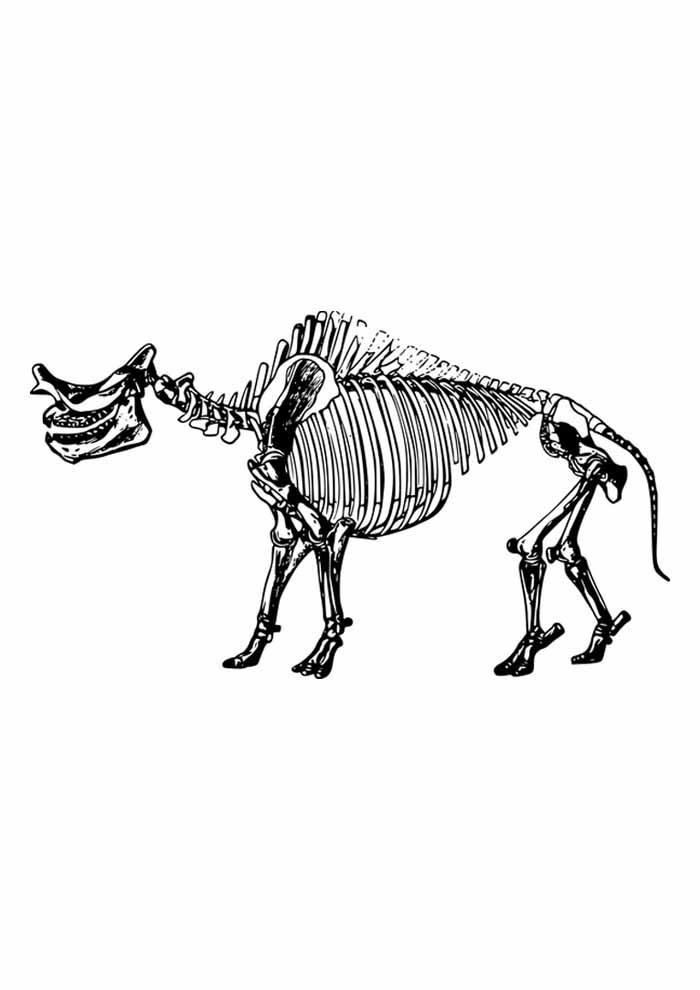 dinossauro para colorir esqueleto